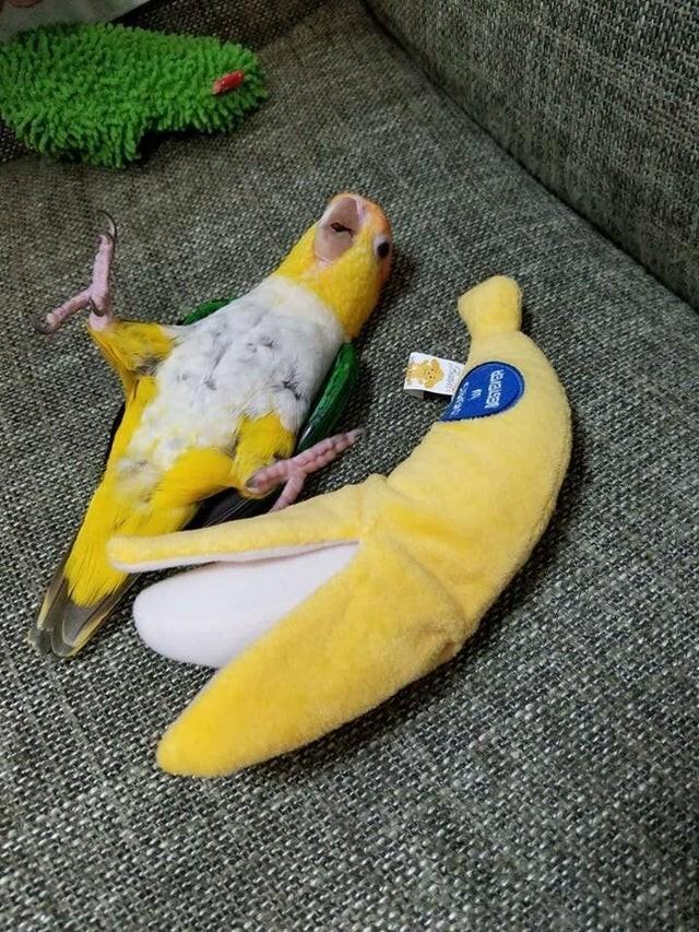 Смотри, я - банан