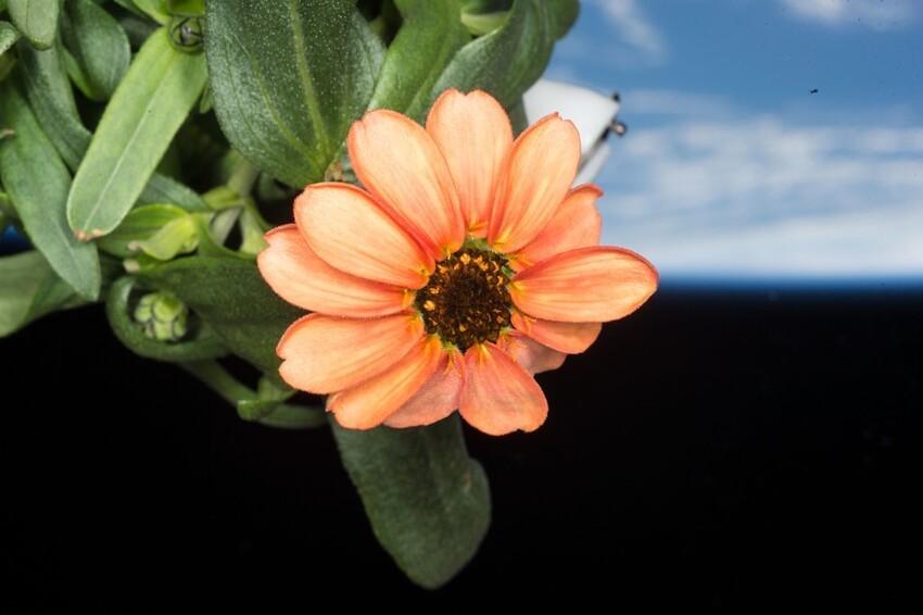 Этот цветок расцвёл в космосе