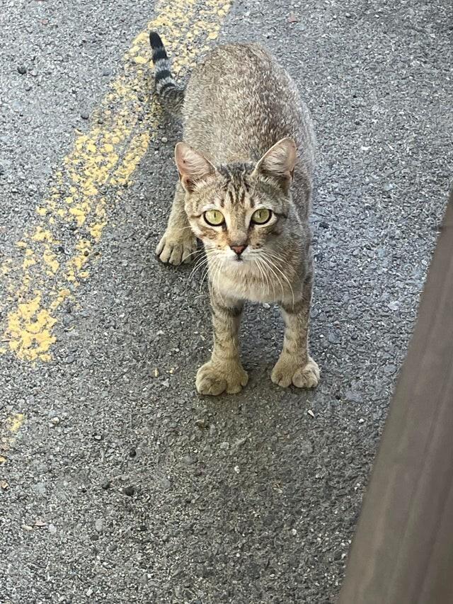 В результате мутации, у этой кошки слишком большие лапки