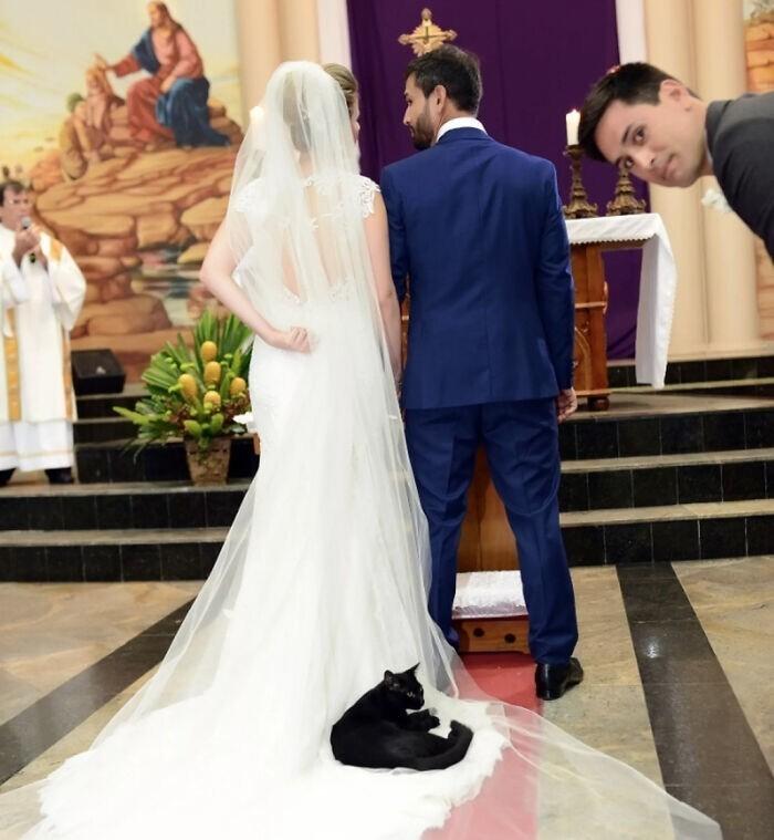 13. Черная кошка, живущая в церкви, решила прилечь на платье невесты во время церемонии