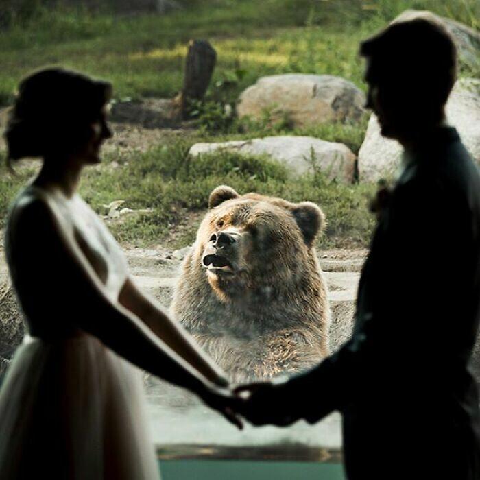 """31. """"Мы поженились в зоопарке, у медведя была интересная реакция"""""""