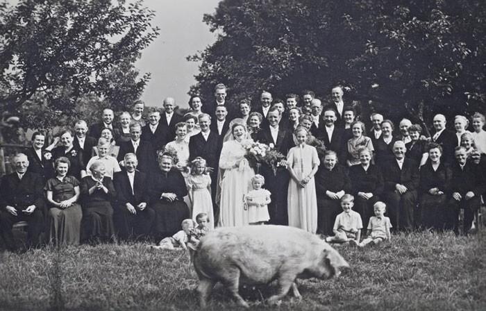 """19. """"На свадьбе бабушки в кадре пробежала свинья. 1927 год"""""""