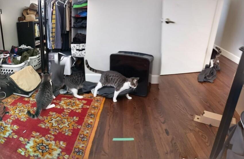 Панорамное фото кошки, которая ворует брюки из шкафа