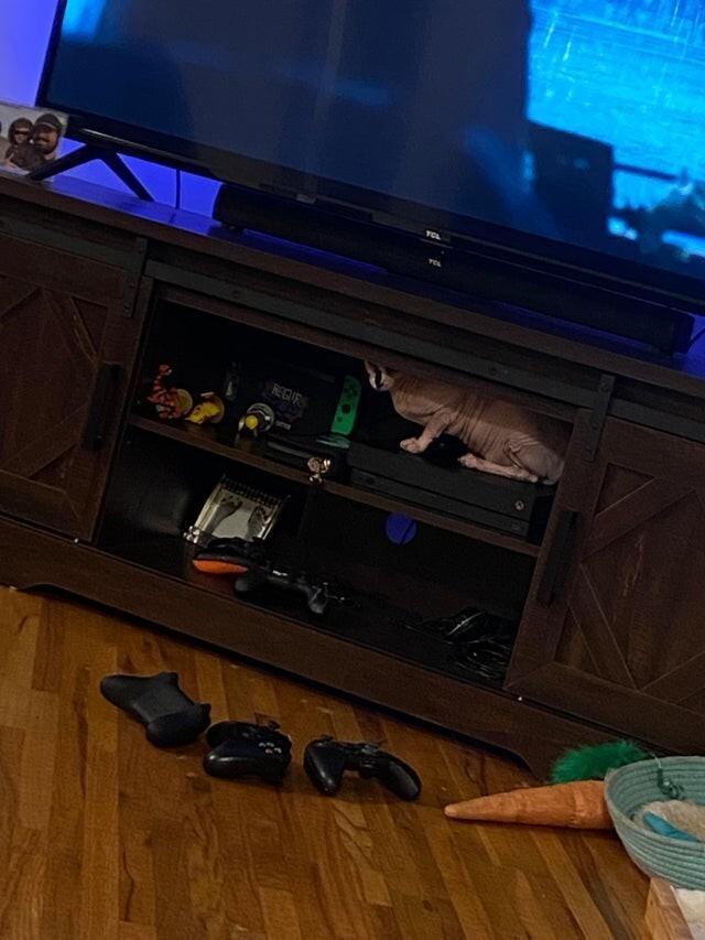 Он постоянно всё сбрасывает на пол, чтобы было удобно спать на полке