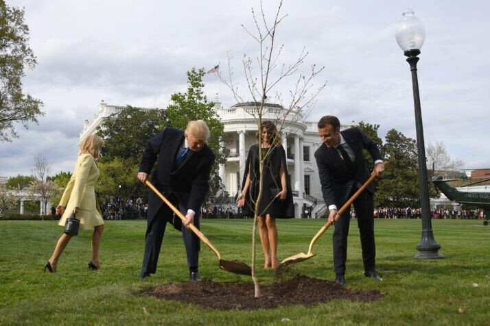 """В 2019 году Дерево дружбы, которое президенты Франции и США посадили у Белого дома как символ дружбы, погибло, когда его поместили в карантин, """"который обязателен для любого живого организма, импортируемого в США"""""""