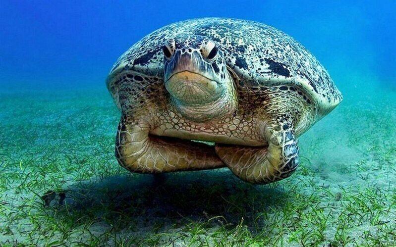 Органы 100-летней черепахи не отличить от органов подрастающей особи