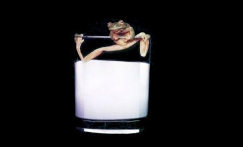 Когда не было холодильников, на Древней Руси и во Франции лягушек помещали в молоко, чтобы оно не прокисло. Якобы считалось, что выделения из кожи лягушки имеют антигрибковый эффект