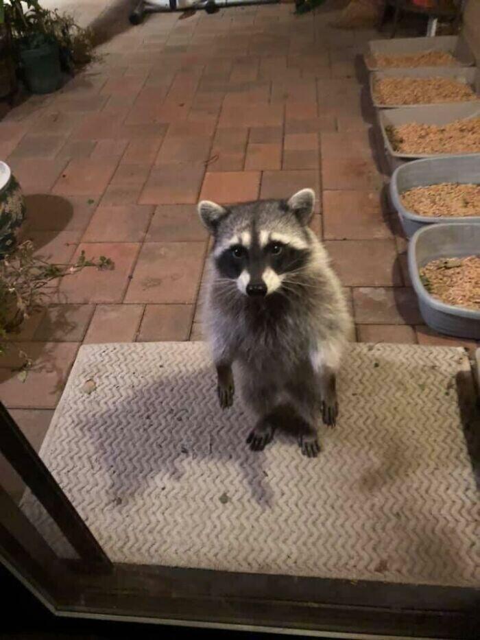 """""""Привет, человек. Я пришел. Где еда?"""""""