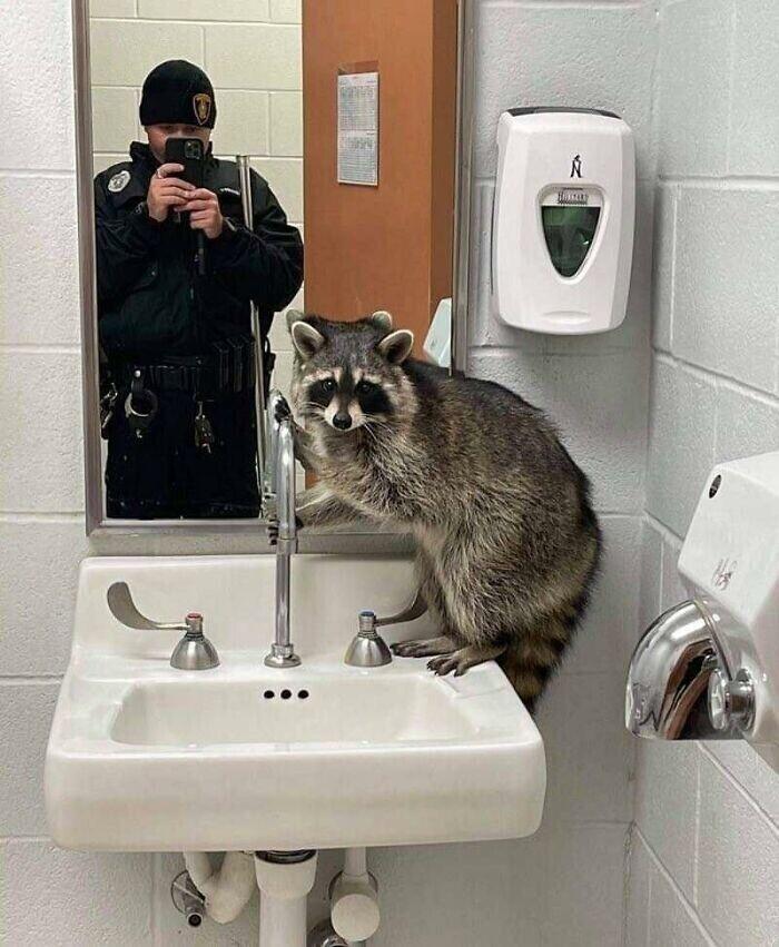 Пойман за преступлением в туалете