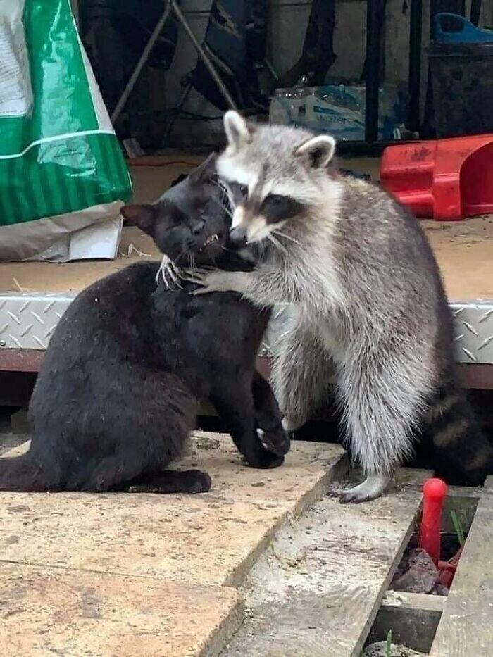Любовь - это... Когда терпишь его запах изо рта, когда он только что копался в мусоре