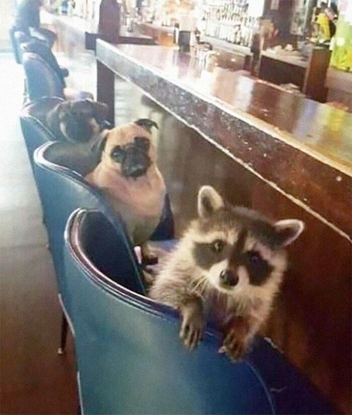 Парни пришли развлечься в бар