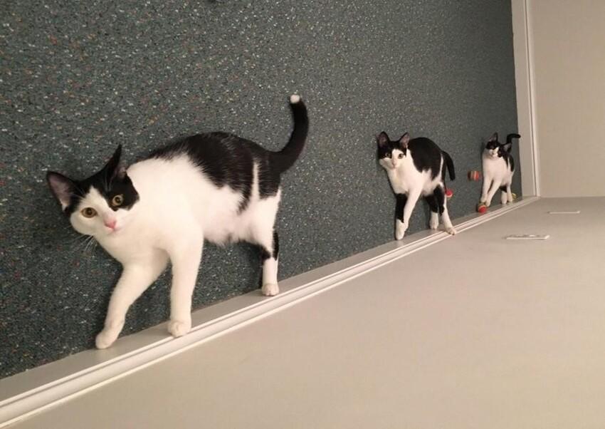 Кошки нарушают законы физики