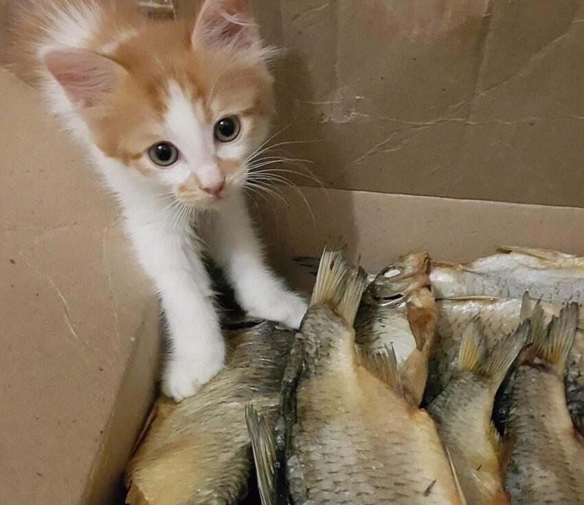 15 рыбов с котиками: красивое