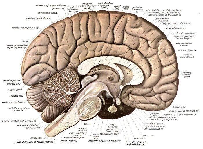 10. Мы используем 100% нашего мозга. Это миф, что мы используем только небольшую часть нашего мозга - это лишь гипотеза, которую не подтверждают научные данные