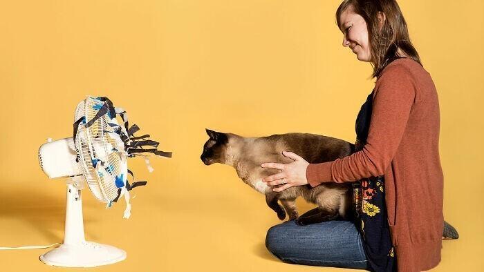20. Кошки дадут собакам фору по многим тестам на социальный интеллект, но очень немногие ученые настолько терпеливы, чтобы попытаться изучить их