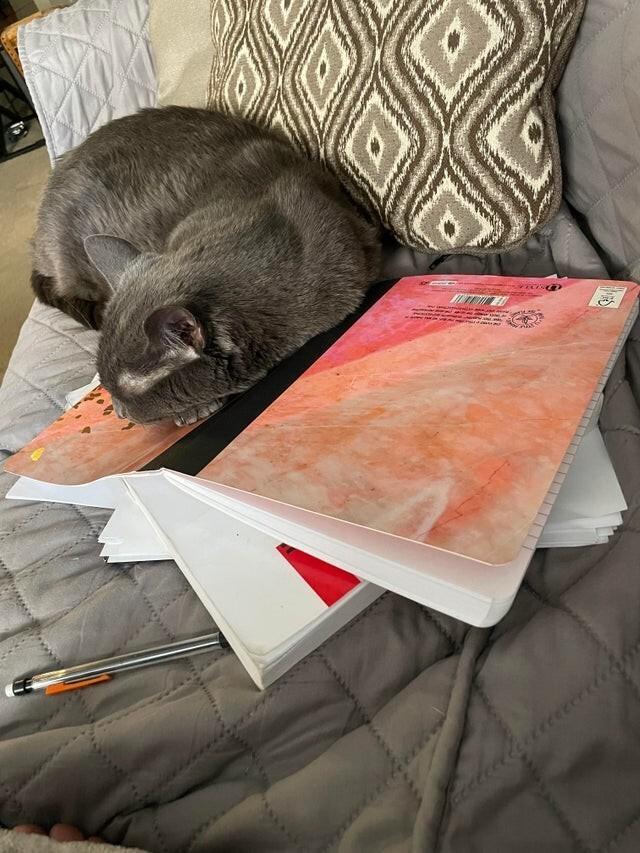 Она не хочет, чтобы я учился
