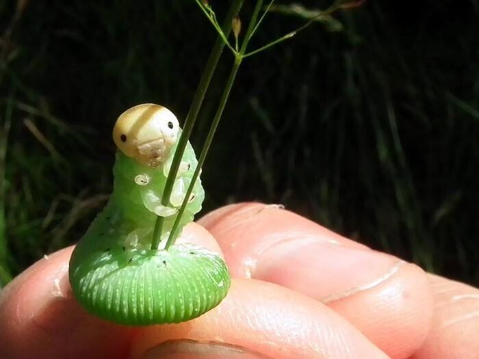 Гусеница позирует