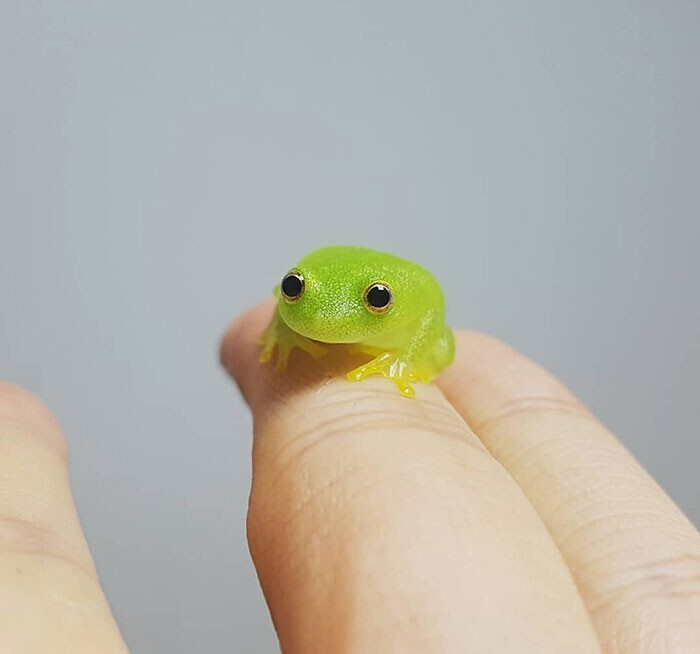 Крохотная лягушка