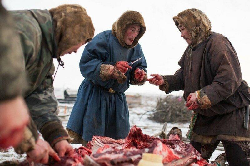 Северный деликатес, смертельный для жителей других широт