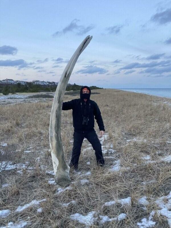 """""""Нашел на пляже в Новой Англии челюсть кита-горбача"""""""