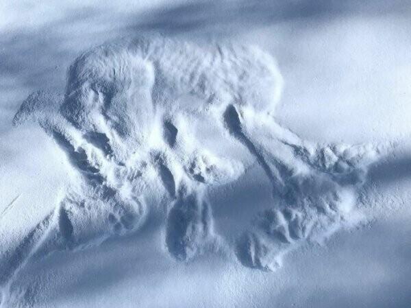 """""""Обнаружил в лесу лежку волка"""""""