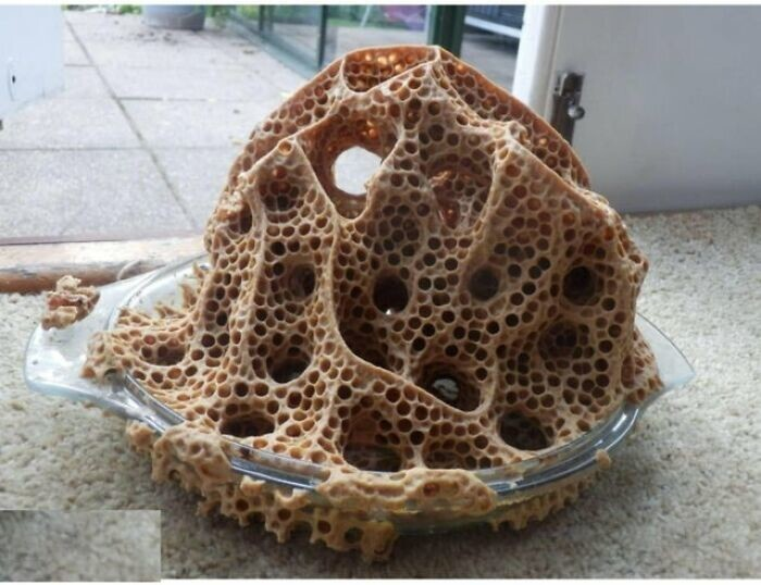 18. Осы строят гнездо в форме для выпечки