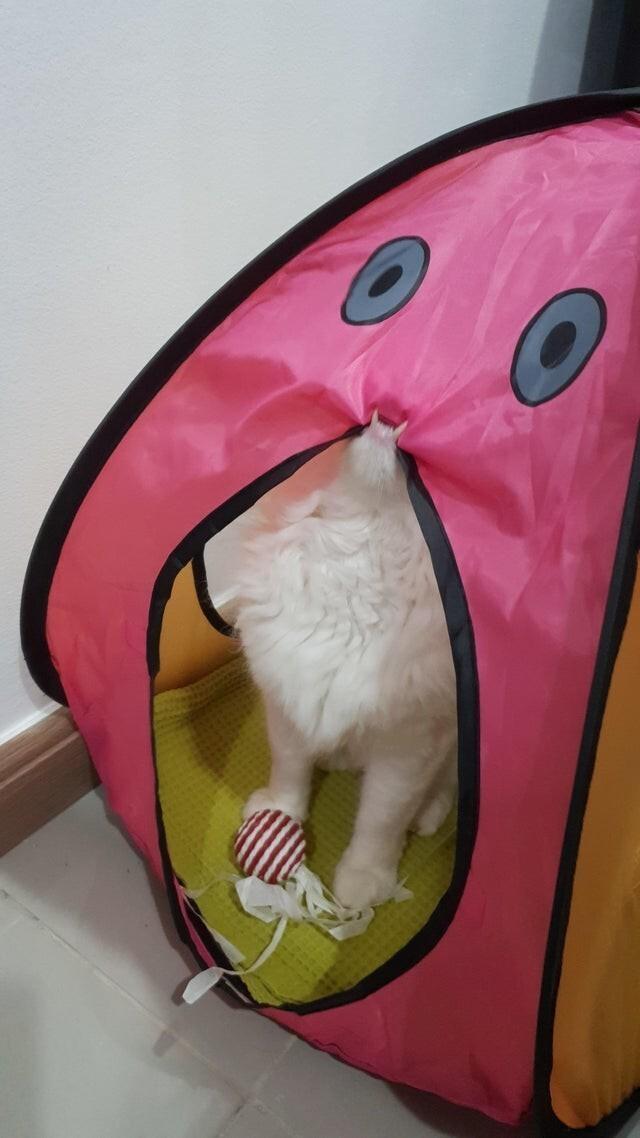Нашему коту очень понравилась палатка
