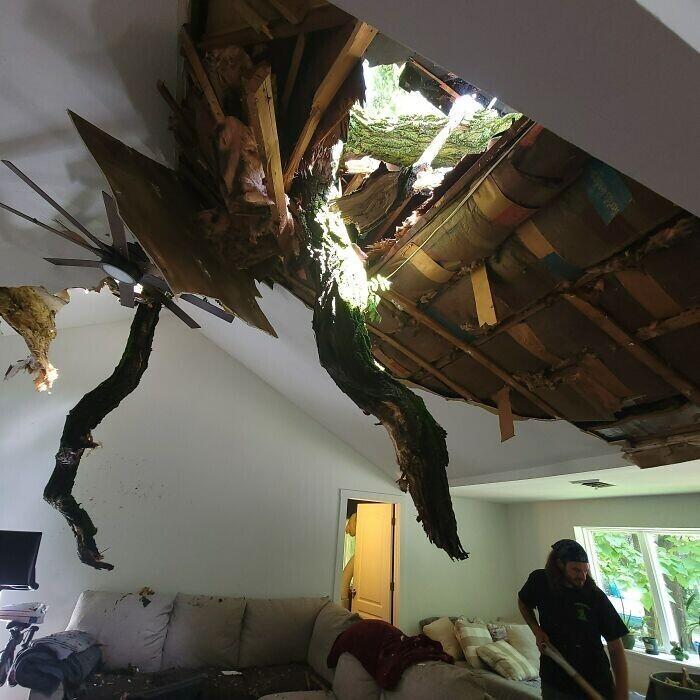 """""""Сегодня на наш дом упало соседское огромное дерево. Как же нам не хватало этого единения с природой..."""""""