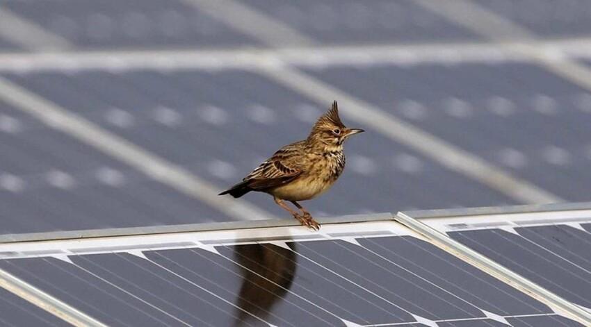 Про солнечные электростанции в пустыне Сахара