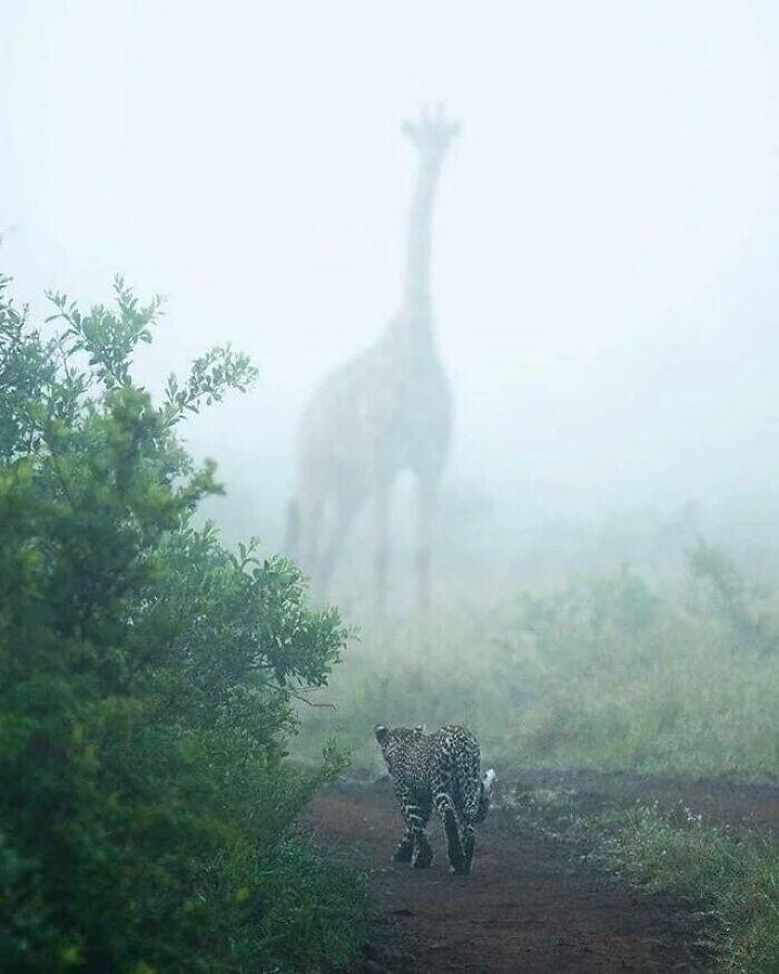 Гигант в тумане