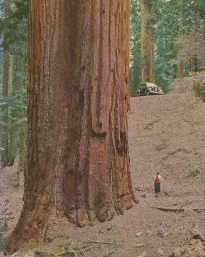 Так вот ты какое, красное дерево!