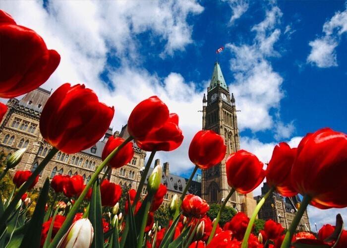 """""""Сегодня я узнал, что Нидерланды ежегодно дарят Канаде 20 тысяч тюльпанов в знак благодарности за защиту нидерландской королевской семьи во Второй мировой войне"""""""