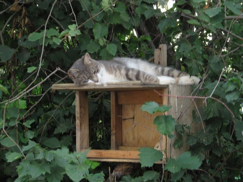 Вечерняя порция котиков