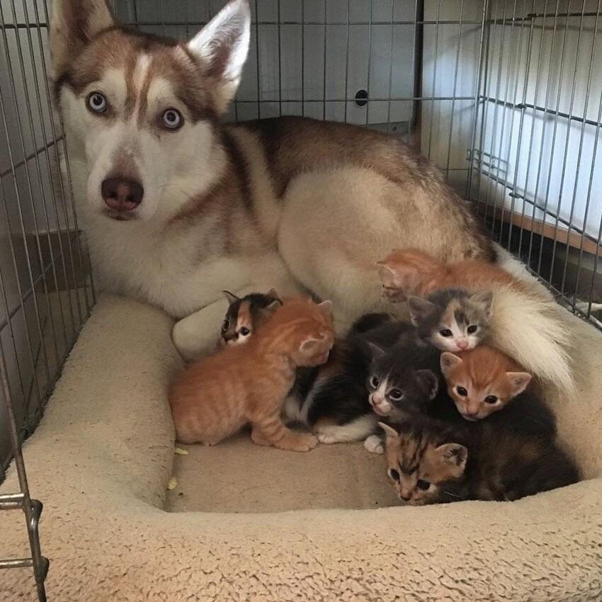 15 псов, перевоспитанных котами