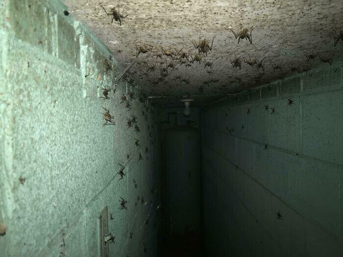 """22. """"Выяснилось, что в доме, в котором мы живем, внизу есть бункер. Мне удалось втиснуть телефон в одну из дверных щелей, чтобы сделать этот жуткий снимок"""""""