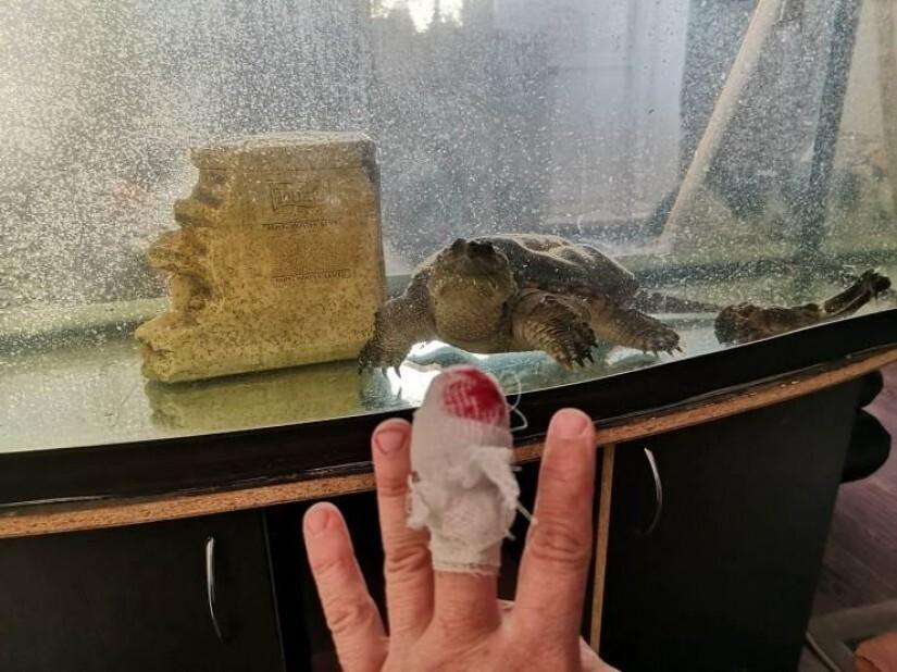 Кто же знал, что черепаха плотоядная!