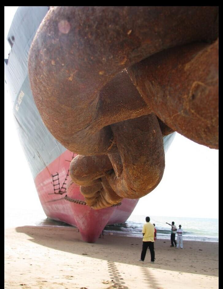 20 снимков с морскими гигантами