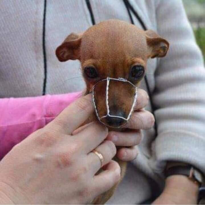 Каждой собаке - по наморднику!
