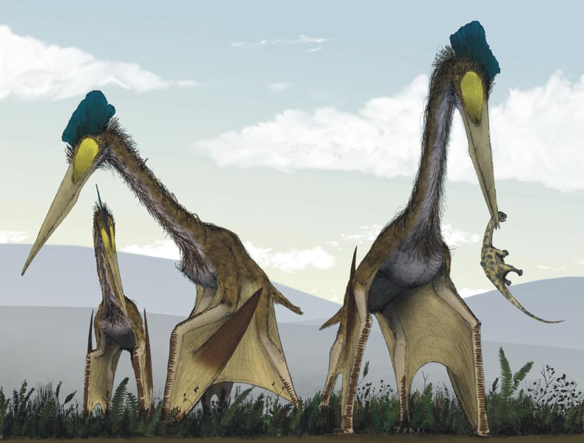 10 животных, благодаря вымиранию которых мы всё ещё живы