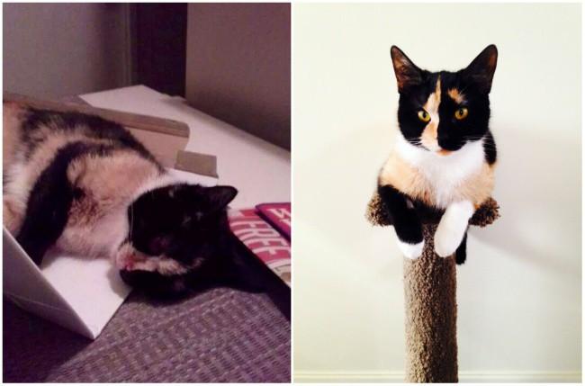 15 животных до и после того, как их забрали из приюта