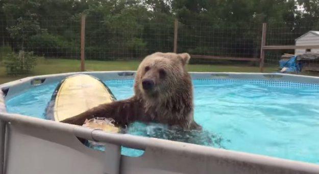 Этот медведь точно знает толк в развлечениях.