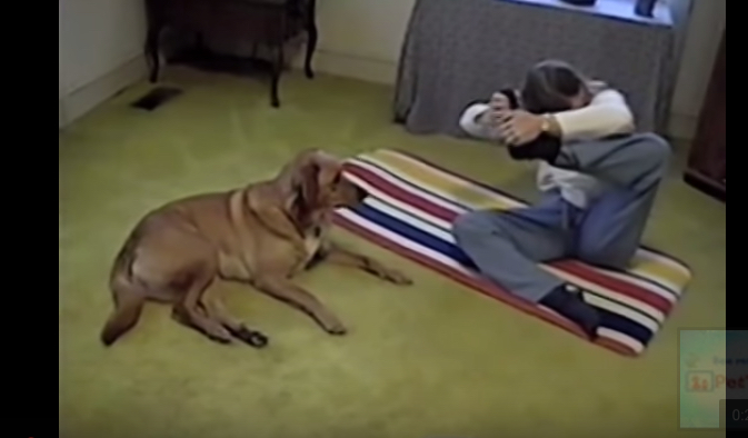 Тот самый случай, когда у собаки заниматься йогой получается лучше, чем у тебя. Вот умора!