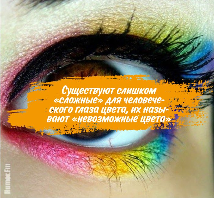 20 познавательных фактов о глазах, которые станут для вас открытием