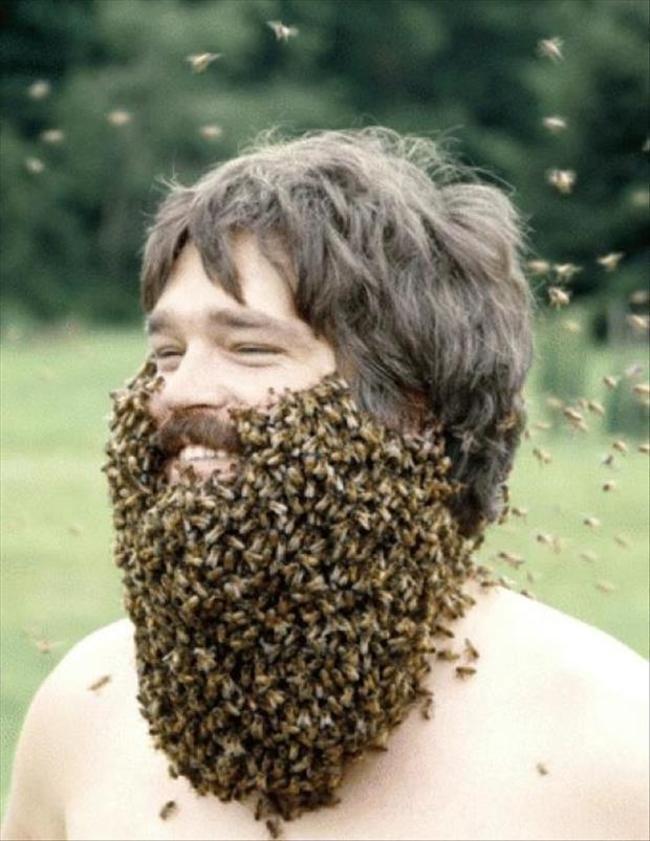 Днем, картинки пчела и пчеловод прикольные