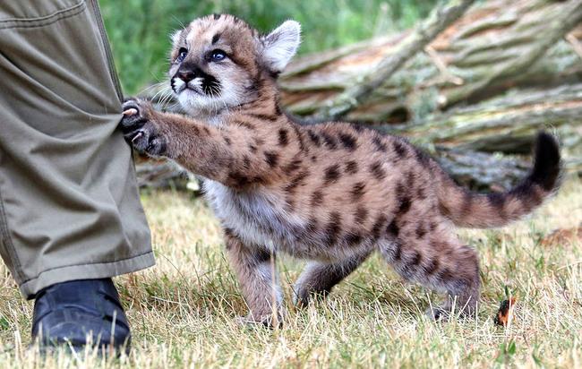 До ужаса мило! 18 очаровательных животных, которым никак не удается выглядеть грозными.