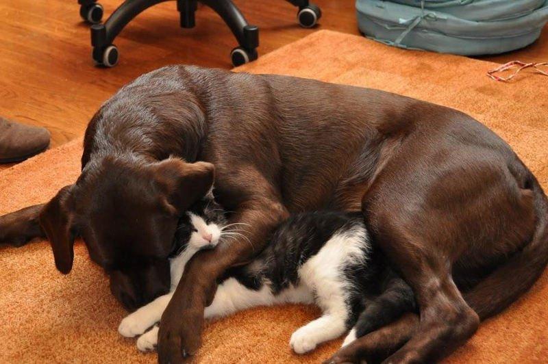Отношение кобеля к щенкам