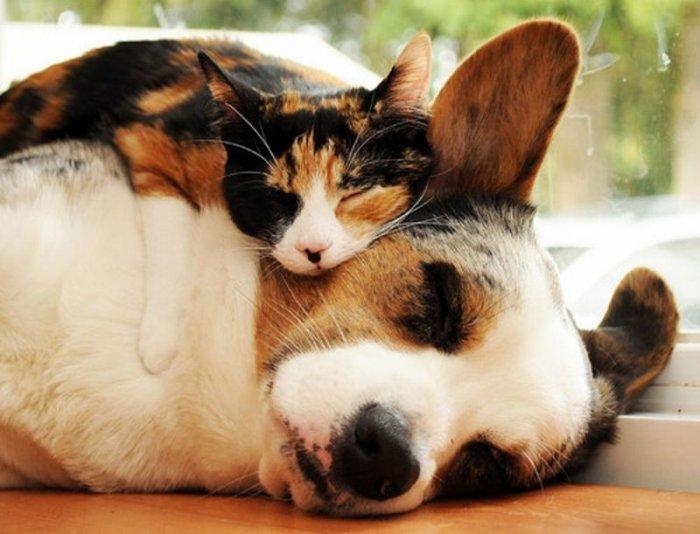 Вечные враги...Кошки и собаки...(осторожно, ми-ми-ми)