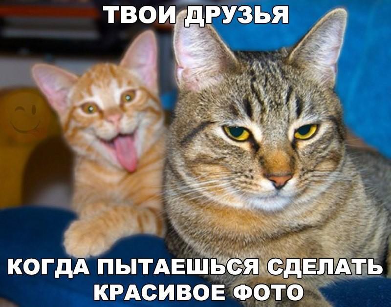 Реально смешные картинки с надписями для поднятия настроения!