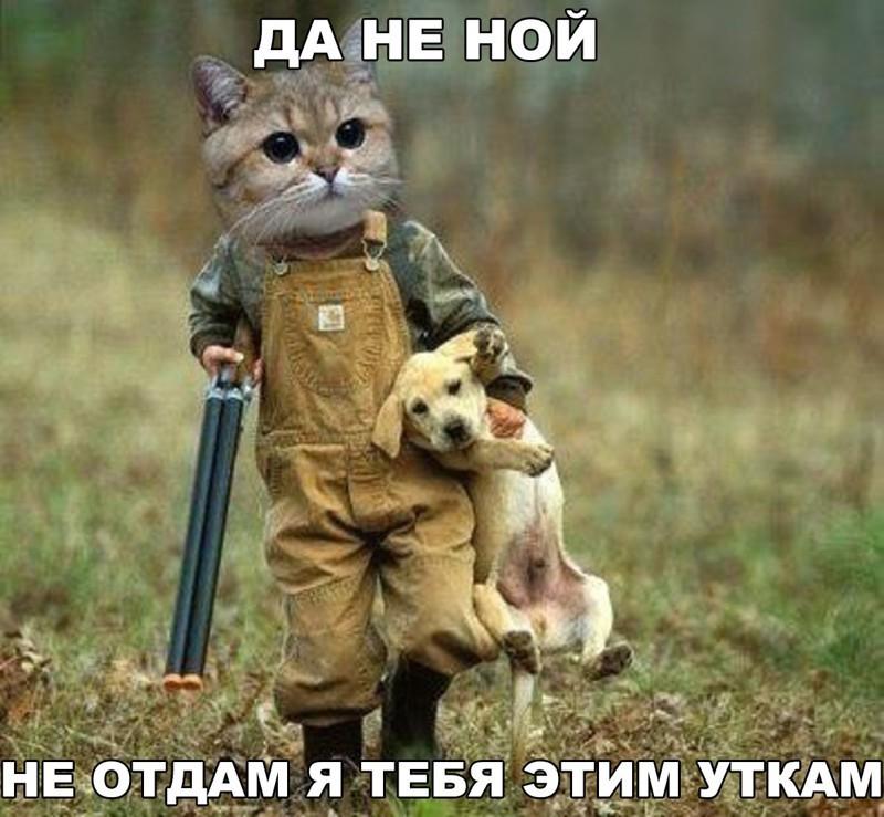 http://humor.fm/uploads/posts/2016-03/17/umndflr0wjc.jpg