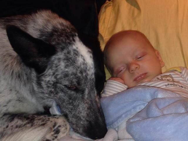 15 собак, которые обожают и оберегают детей